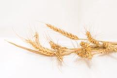 Oídos aislados del trigo en un fondo blanco Foto de archivo