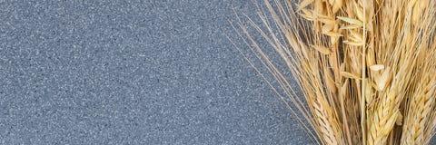 Oídos brillantemente amarillos del trigo y de la cebada en el fondo del granito gris fotografía de archivo