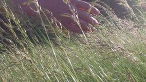Oídos conmovedores de la mano en el campo a cámara lenta metrajes