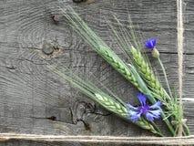 Oídos de la cebada y de los acianos Imagen de archivo