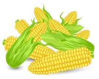 Oídos de la colina del maíz maduro Imagen de archivo libre de regalías