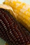 Oídos de maíz Fotos de archivo libres de regalías