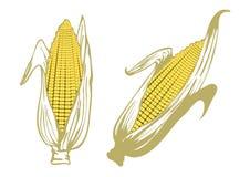 Oídos de maíz Imagen de archivo libre de regalías