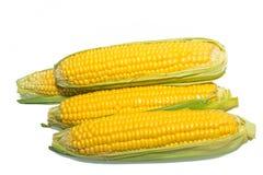 Oídos de maíz aislados Foto de archivo libre de regalías
