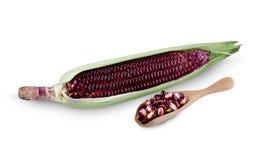Oídos de maíz frescos con las hojas fijadas aisladas en el fondo blanco imagenes de archivo