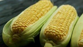 Oídos de maíz maduros con las hojas almacen de metraje de vídeo