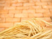 Oídos de oro frescos de la cebada del trigo con el fondo del ladrillo del vintage imagen de archivo libre de regalías