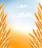 Oídos del fondo del trigo stock de ilustración