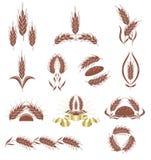 Oídos del grano. ilustración del vector
