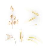 Oídos del grano Imagen de archivo