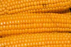 Oídos del maíz Imagen de archivo libre de regalías