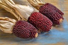 Oídos del maíz de la fresa Imagen de archivo libre de regalías
