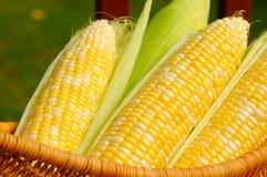 Oídos del maíz dulce Imágenes de archivo libres de regalías