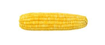Oídos del maíz dulce aislados en el fondo blanco imagenes de archivo