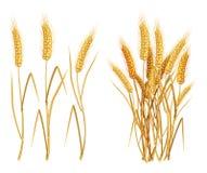 Oídos del trigo