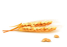 Oídos del trigo stock de ilustración