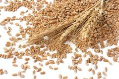 Oídos del trigo Imagen de archivo libre de regalías