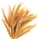 Oídos del trigo Imagenes de archivo