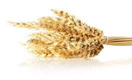 Oídos del trigo aislados en el fondo blanco Fotos de archivo