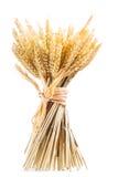 Oídos del trigo aislados en el fondo blanco Imagen de archivo libre de regalías