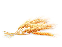 Oídos del trigo aislados en el fondo blanco EPS 10 Imagen de archivo libre de regalías