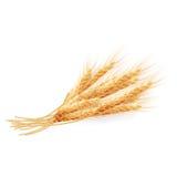 Oídos del trigo aislados en el fondo blanco EPS 10 Imágenes de archivo libres de regalías