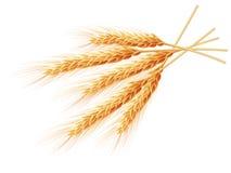 Oídos del trigo aislados en el fondo blanco EPS 10 Imagenes de archivo
