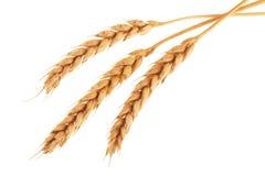 Oídos del trigo aislados en el fondo blanco Visión superior Foto de archivo