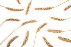 Oídos del trigo aislados en el fondo blanco Visión superior Modelo plano de la endecha Foto de archivo libre de regalías