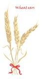 Oídos del trigo atados con el arco rojo en el fondo blanco libre illustration