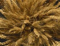 Oídos del trigo, centeno, pshenici del mijo montado en ramo imágenes de archivo libres de regalías