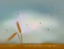 Oídos del trigo contra el cielo Foto de archivo libre de regalías