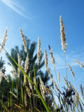 Oídos del trigo en el bosque imágenes de archivo libres de regalías