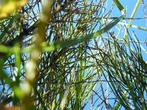 Oídos del trigo en el bosque imagen de archivo