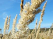 Oídos del trigo en el bosque foto de archivo libre de regalías