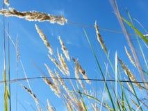 Oídos del trigo en el bosque fotos de archivo