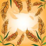 Oídos del trigo en fondo Fotos de archivo libres de regalías