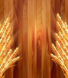 Oídos del trigo en fondo de madera Fotografía de archivo libre de regalías