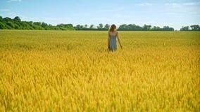 Oídos del trigo del tacto de la mujer que caminan Mujer de la belleza de la naturaleza almacen de metraje de vídeo