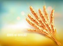 Oídos del trigo Vector stock de ilustración