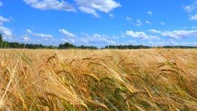 Oídos del trigo y del cielo nublado metrajes