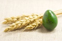 Oídos del trigo y huevo verde Imagen de archivo libre de regalías