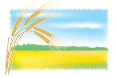 Oídos y campo de Rye. Ilustración del vector. Imágenes de archivo libres de regalías