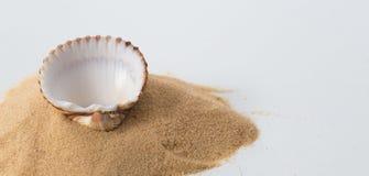 Общий куколь, seashell edule cerastoderma и картина песка на белизне стоковые фото