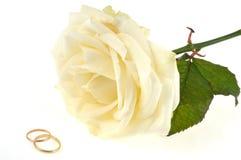 Обручальные кольца и белая роза на белой предпосылке стоковое изображение rf