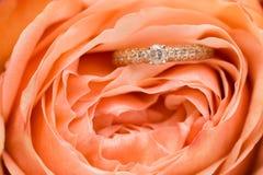 Обручальные кольца с розовой розой стоковое изображение rf
