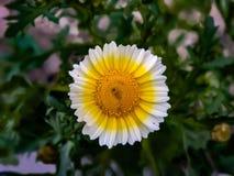 Обои солнцецвета красивого круга форменные стоковые фотографии rf