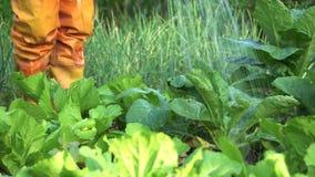 Овощ садовника моча в огороде проходить слева направо Сельская местность Таиланда акции видеоматериалы