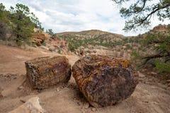 Окаменеванный ствол дерева, Юта стоковые фото