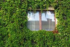 Окно обрамлено сочной растительностью стоковые изображения